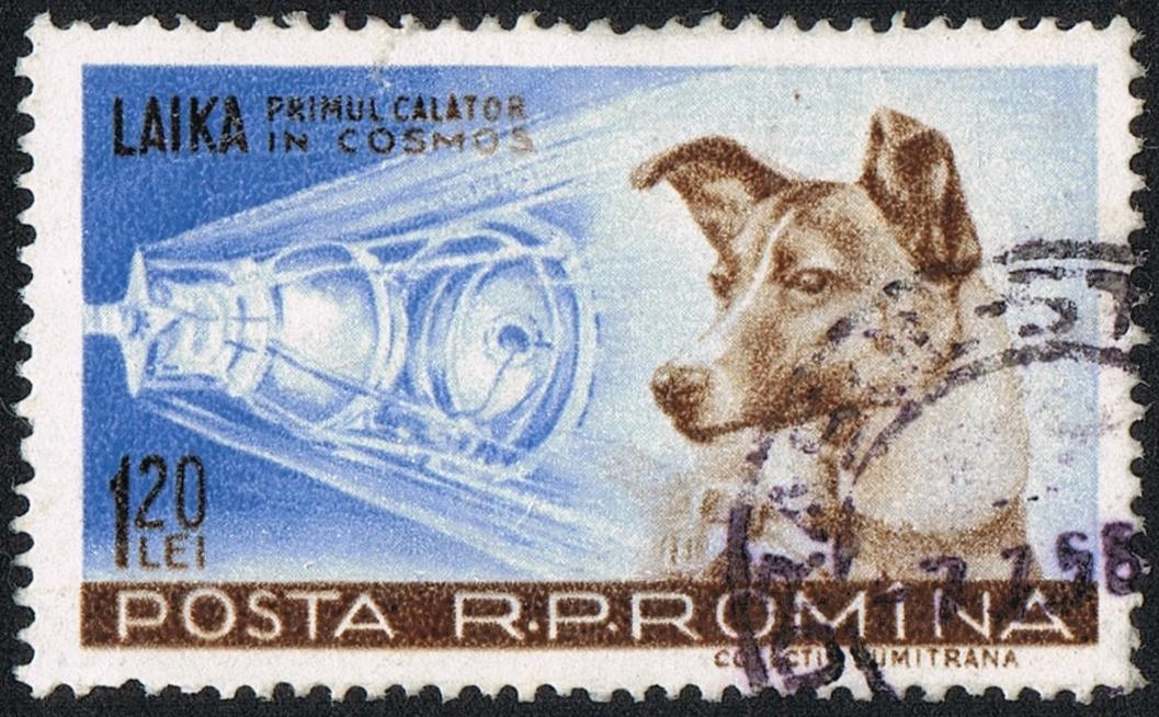 63 anni fa, un cagnolino volò nello spazio